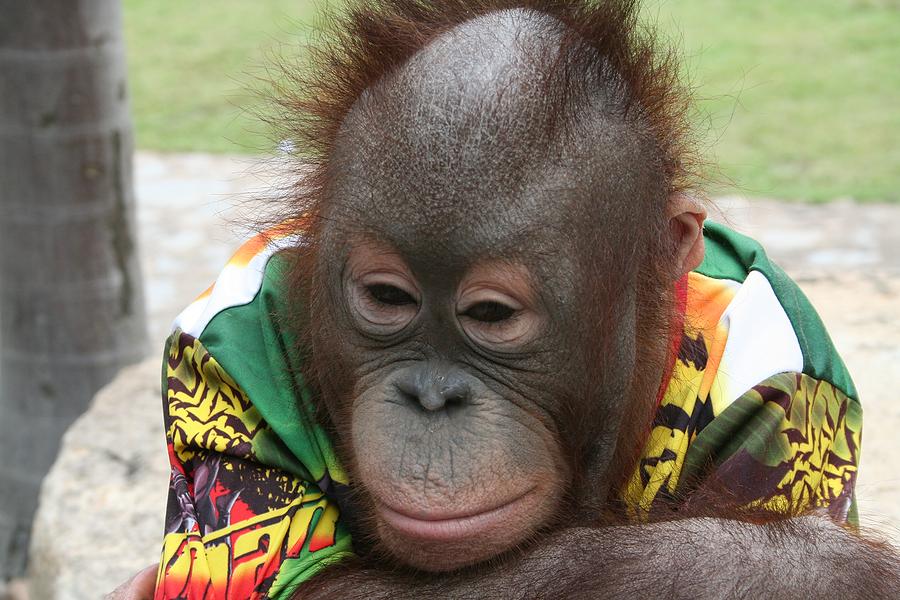 bored monkey ignoring social media