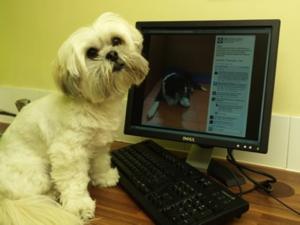 Puppy reading WXV Facebook page