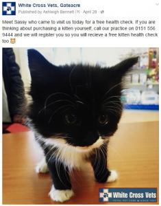 WXV Kitten health checks on Facebook